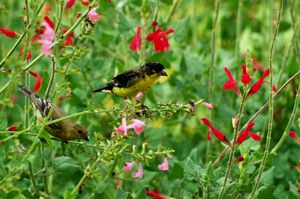 Two goldfinches among flowers