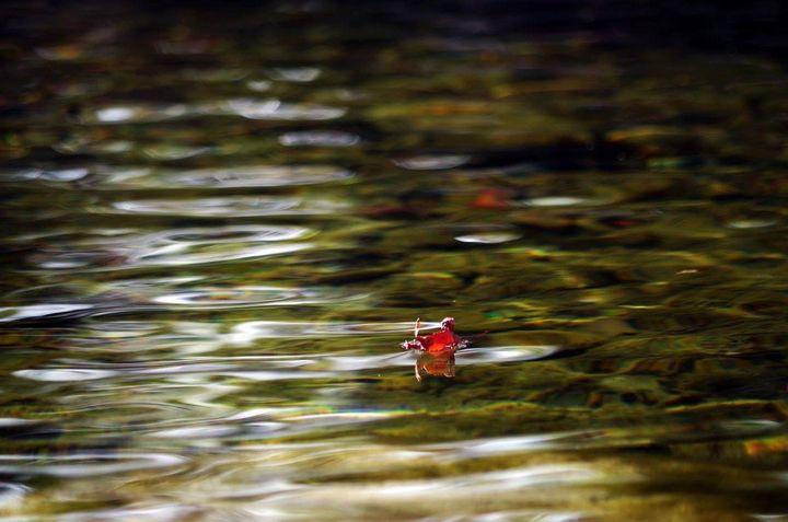 Fall leaf floating on water - ERNReed