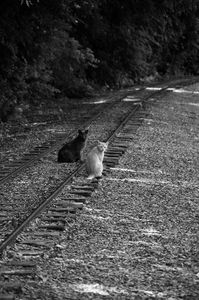 Cats on the line - ERNReed