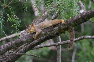 Squirrel chillin'