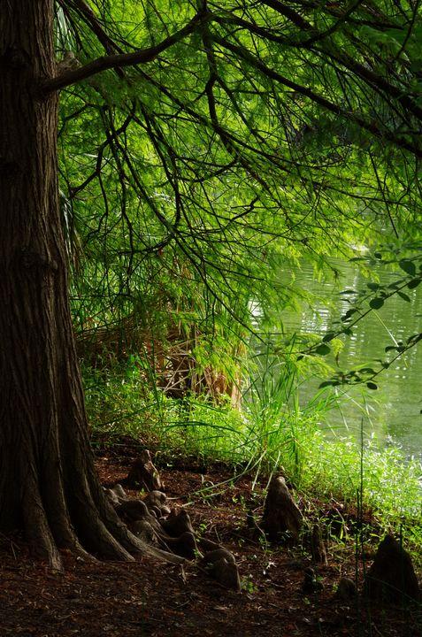 Pond-side tree - ERNReed