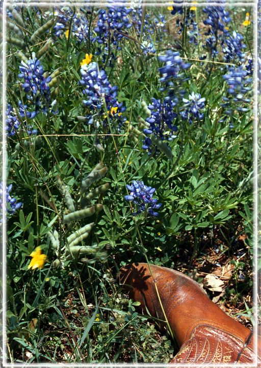 Bluebonnets and old boot - ERNReed