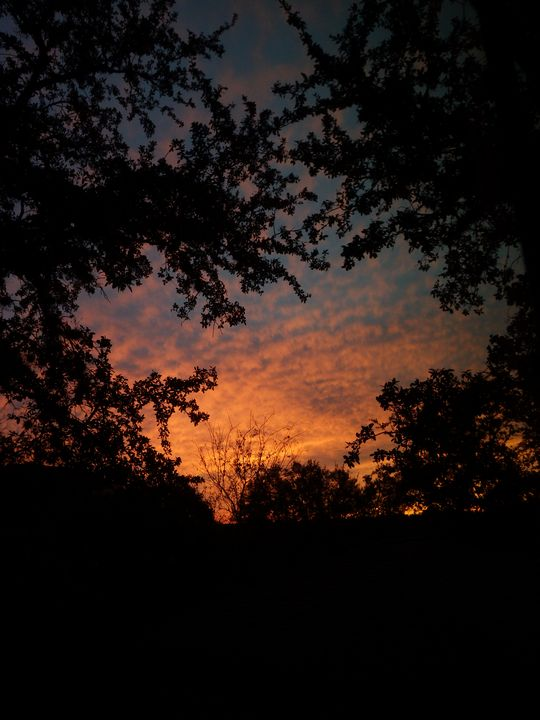 Sunrise through trees - ERNReed