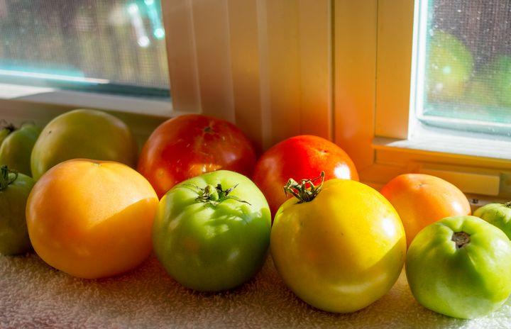 Tomatoes ripening - ERNReed