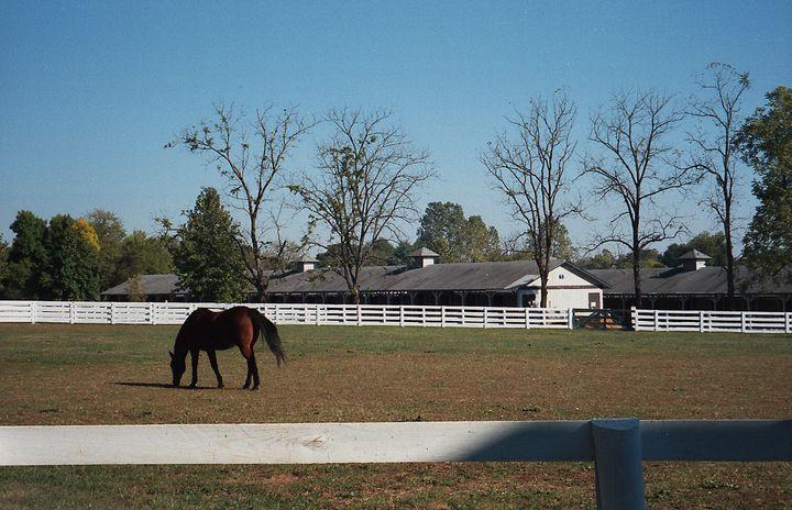 Kentucky Horse Park - ERNReed