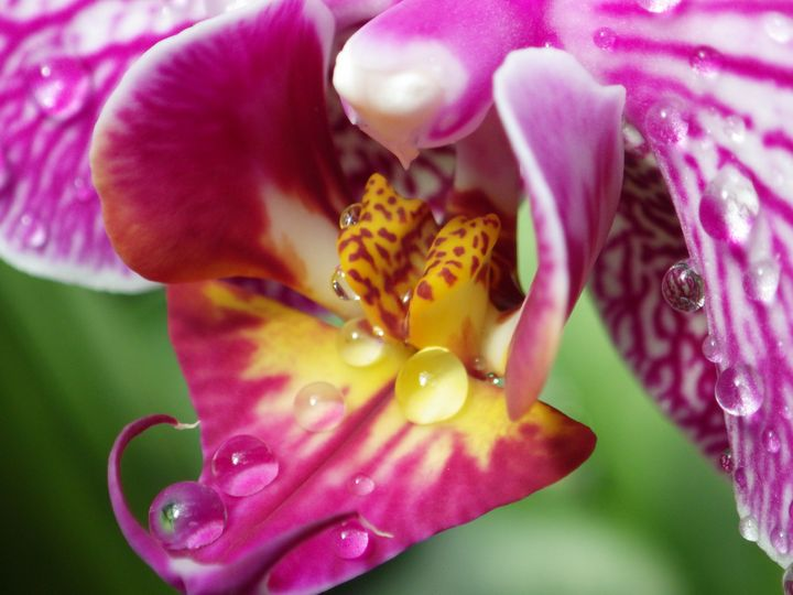 Very close view wet orchid - ERNReed