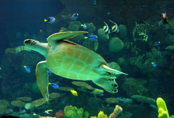 Turtle - ERNReed