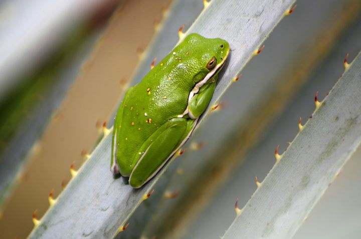 frog on cactus - ERNReed
