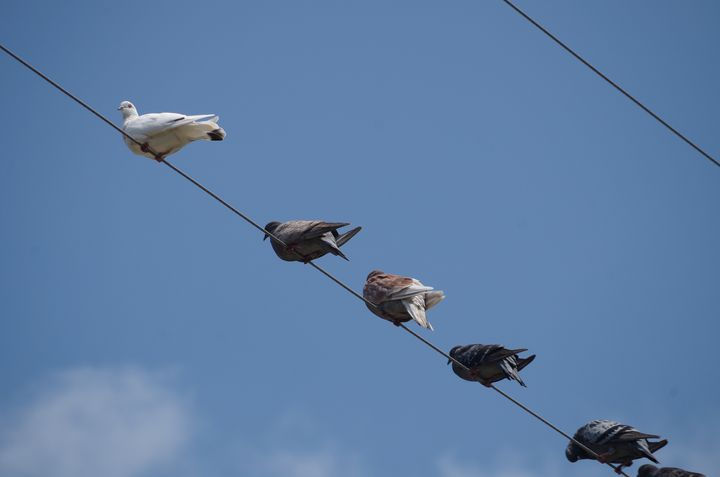 birds on a wire - ERNReed