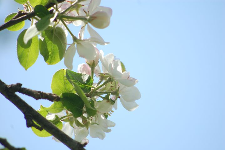 Spring Flowers - Shyanne Photography