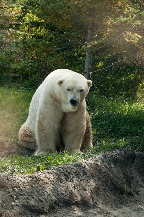 Polar Beeeaar - Shyanne Photography