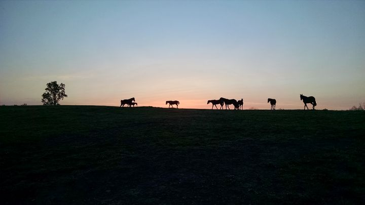 The Herd - Shyanne Photography