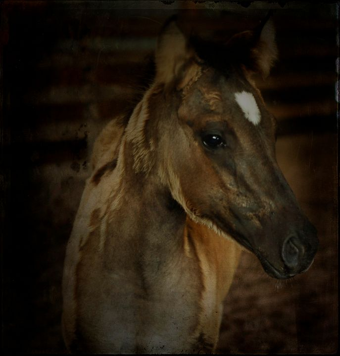 Filly - Shyanne Photography