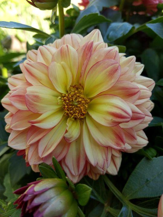 Beautiful flower - Shyanne Photography