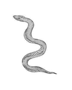 Dot work Snake Art Print