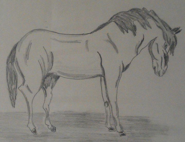 horse - Jawwad