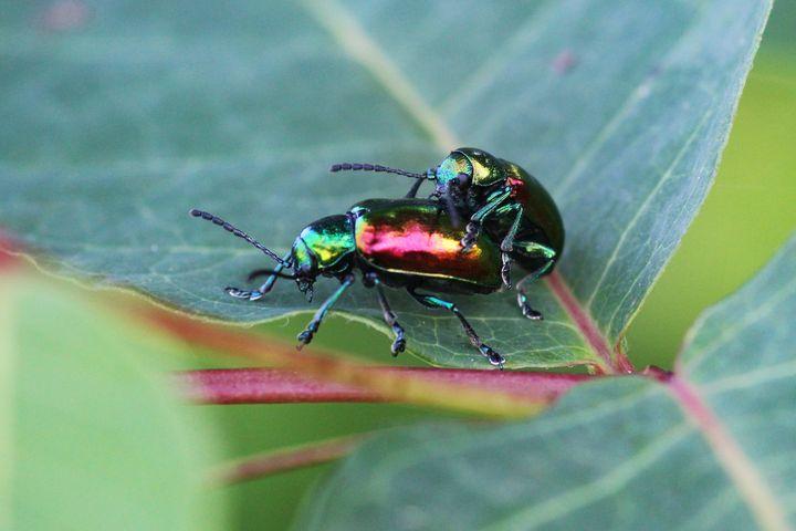 Love Bugs - Nic Nak Art