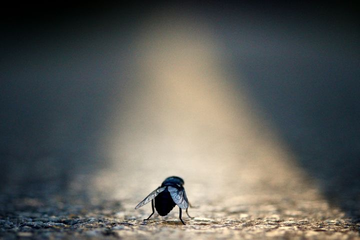 Little Bug, Big World - Nic Nak Art
