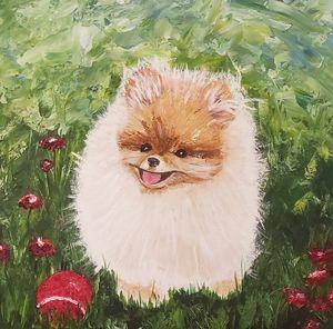 Pumpkin Pomeranian Puppy Red Ball