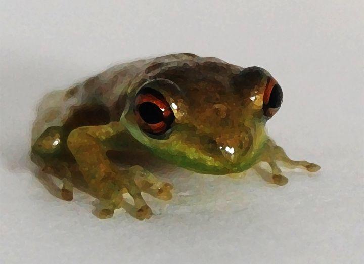 Curious Frog - NICO