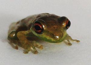 Curious Frog