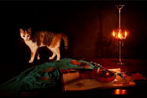 Nocturne for violin a cat