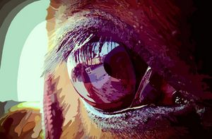 The Eye of Bogema