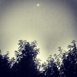 Luna's trees
