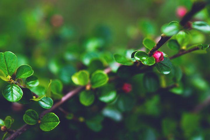Tiny red blossom - Parachromal