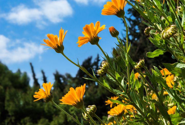flowers in the sky - Parachromal