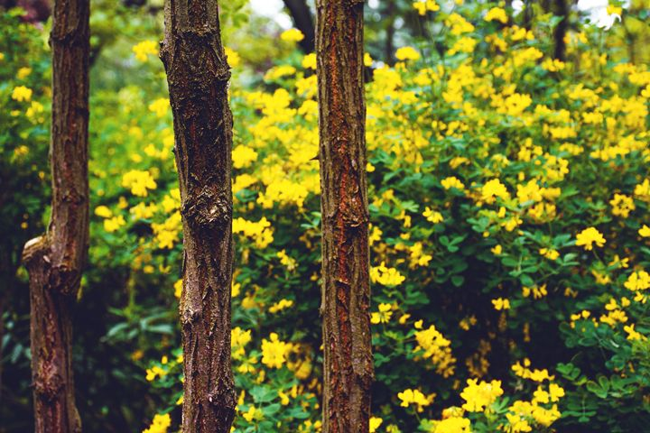 tree barks - Parachromal
