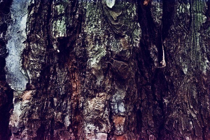 tree bark - Parachromal