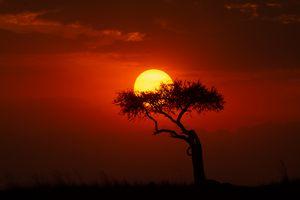 This is Africa - WildildTrailsSafari