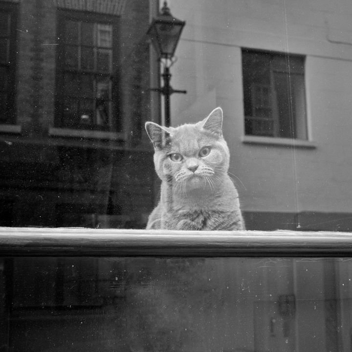 Cat in Window - Linda Wisdom