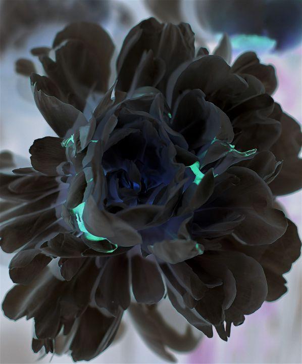 Blue on Black - TBass Art