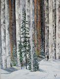 Birch Tracks Acrylic on Canvas
