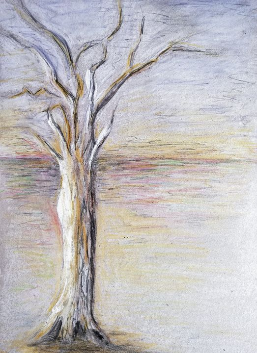 Tree, semidesert - Marelise Phillips