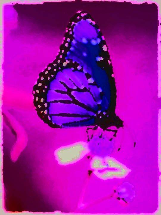 Purple Butterfly - Blaire Hobbs Photography & Digital Arts