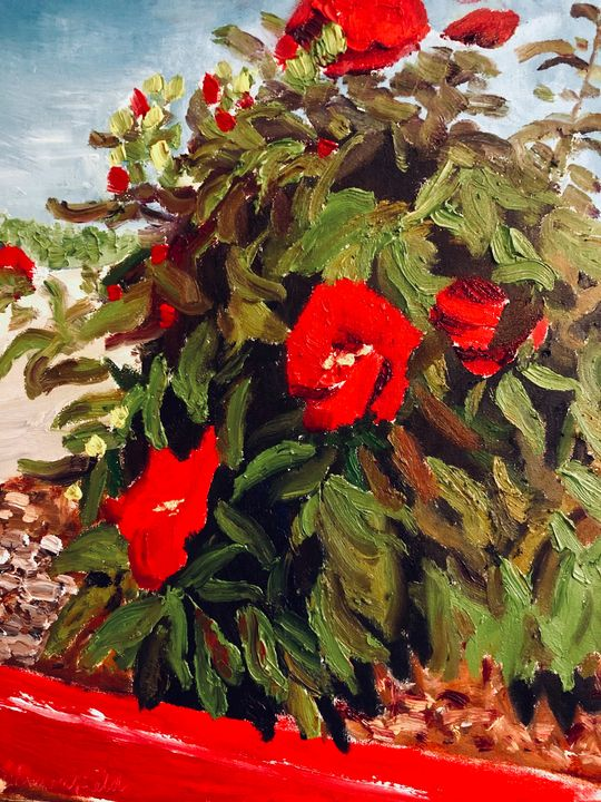 Fire Lane Hibiscus - Blandine Broomfield