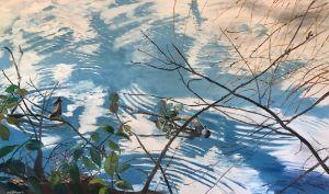 Stalking the Wild Turtle - Blandine Broomfield