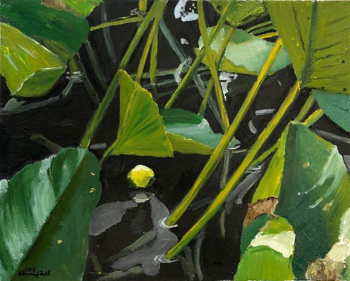 Lotus Bud - Blandine Broomfield