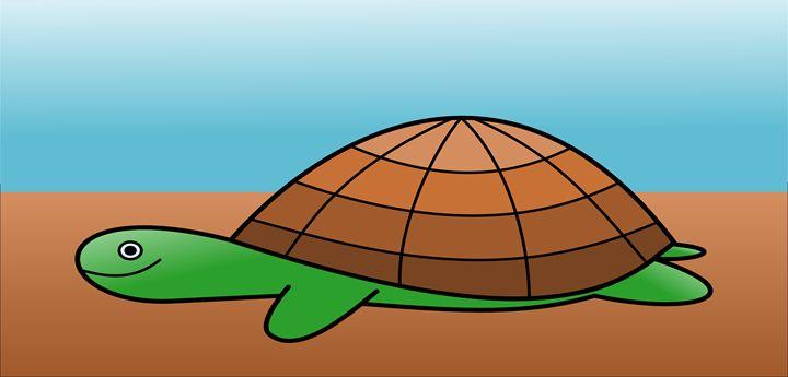 Turtle - Amir