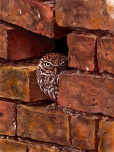 'Little Owl in Wall'