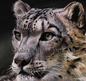 John Palmer Fine Art