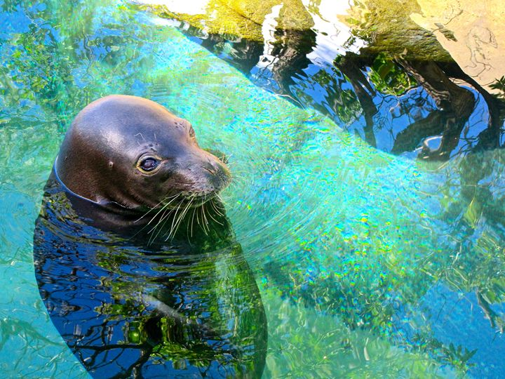 Seal - Gena