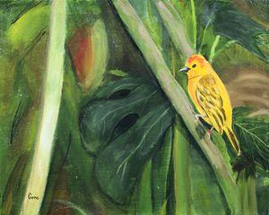Saffron Finch - Gena