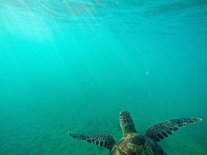 Turtle in the Sea - Gena