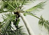 Wind in palm tree