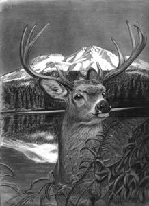 Lake Siskiyou (Mt. Shasta w/ Deer)