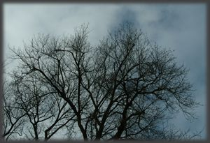 Trees and Clouds No 1